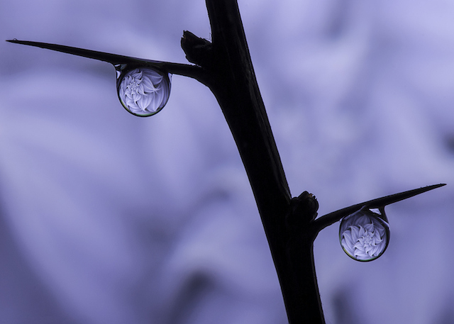 dave-wood-water-drops-02