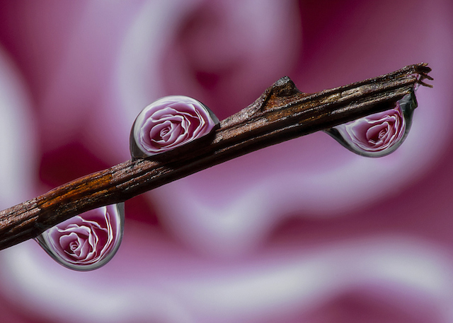dave-wood-water-drops-13