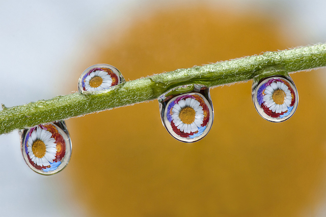 dave-wood-water-drops-14